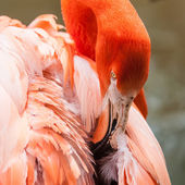 Pink flamingo at a zoo in spring — Stock Photo