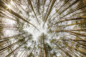 In the deep forest. looking up shot with fisheye lens — Stock Photo