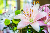 Pink lily flower closeup macro — Foto de Stock