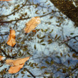 Leaves on the water — Stock Photo