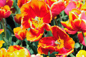 Botanischer garten — Stockfoto