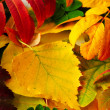 colorful background of fallen autumn leaves — Stock Photo #13489101