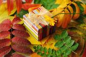 Herbst Stilleben mit Geschenk-box — Stockfoto