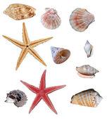 Collectie van zeeschelpen — Stockfoto