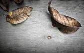 Folhas de outono sobre o espaço da cópia de background.with de madeira — Foto Stock