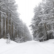 Winter forest — Stockfoto #18728697
