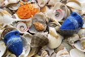 Sea cockleshells background — Stock Photo
