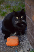 Black cat with white moustaches near wall and brick — Stock Photo