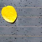 Notes of autumn — Stock Photo #33147239
