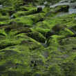 Stock Photo: Green rock on coastline