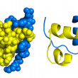 Stock Photo: Insulin structure