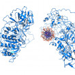 DNA methyltransferase — Stockfoto