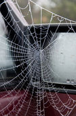 Spider's web on car — Stock Photo