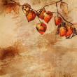 Grunge background with a sketch of orange physalis — Stock Photo