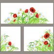 Set summer flower poppy, daisy isolated on white — Stock Vector #21632991