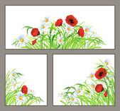 Set summer flower poppy, daisy isolated on white — Stock Vector