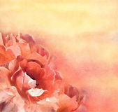 Flowers (roses) in pastel — Stock Photo