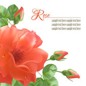 Flower Rose Vector Background — Vetorial Stock