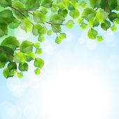 Zielone liście, gałęzie tło wektor — Wektor stockowy