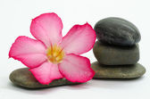 Frangipani and stones — Stock Photo