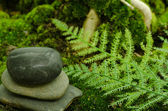 Rocks in garden with fern — Stock Photo