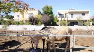 Horses eating — Stock Video