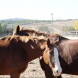 Two horses flirt and play — Vídeo de stock