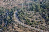 The top view on the road laid through a large forest, Israel — Stock Photo