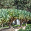 Row of trees in gardens of Baron Edmond de Rothschild (National — Stock Photo