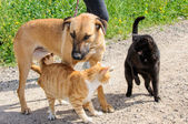Brown dog and two cats together — Stock Photo