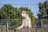 Closeup of a dog looking through the bars of a fance — Stock Photo