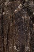 Rock with organic brown texture — ストック写真