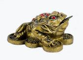 Money Frog — Stock Photo