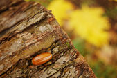 Acorn on a tree stump in the autumn forest — Stock Photo