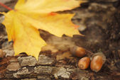 Three acorns and yellow leaf on a tree stump in the autumn forest — Stock Photo