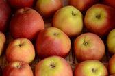 Fresh yellow-red apple pattern — Stock Photo