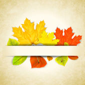 Autumn leaves on scratched paper background — Stock Vector