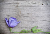 Flower on wooden background — Stock Photo