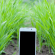 Mobile smart phone in green grass and ground — Stock Photo
