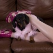 Legs with a small dog — Stock Photo