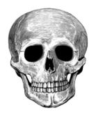 Human skull in engraved style — Stock Vector