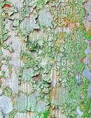 Texture di parete di legno vecchio grunge — Foto Stock