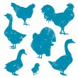 poultry — Stock Vector