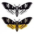 Death's head hawk moth - Stock Vector