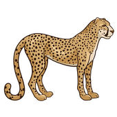 Cheetah — Stock Vector