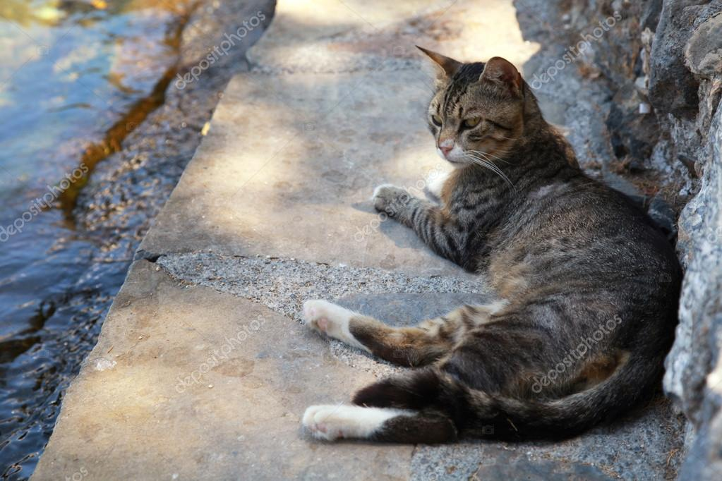 Greek street  cat on the sea pier at the old medieval town (Crete, Greece) — Stock Photo #12200641