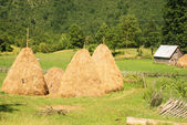 Summer rural landscape with haystacks — Stock Photo