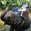 Stock Photo: Elephant ride(Bali, Indonesia)