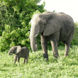 Mother and baby african elephants, Botswana. — Stock Photo #13703020