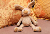 Bunny y almohadas — Foto de Stock